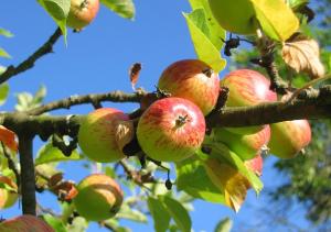 Fresh fruit is great fiber