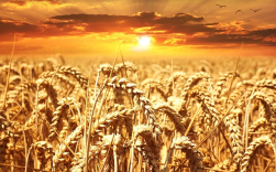 God will separate the wheat from the tares